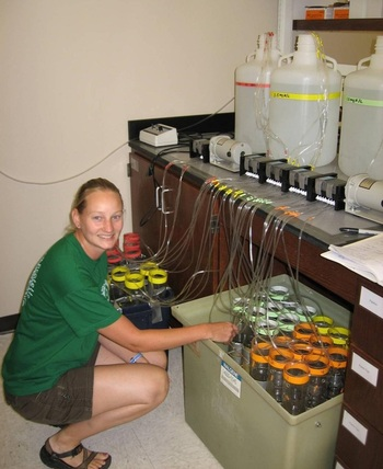 Testing the effects of different nitrate concentrations on soil denitrification rates.
