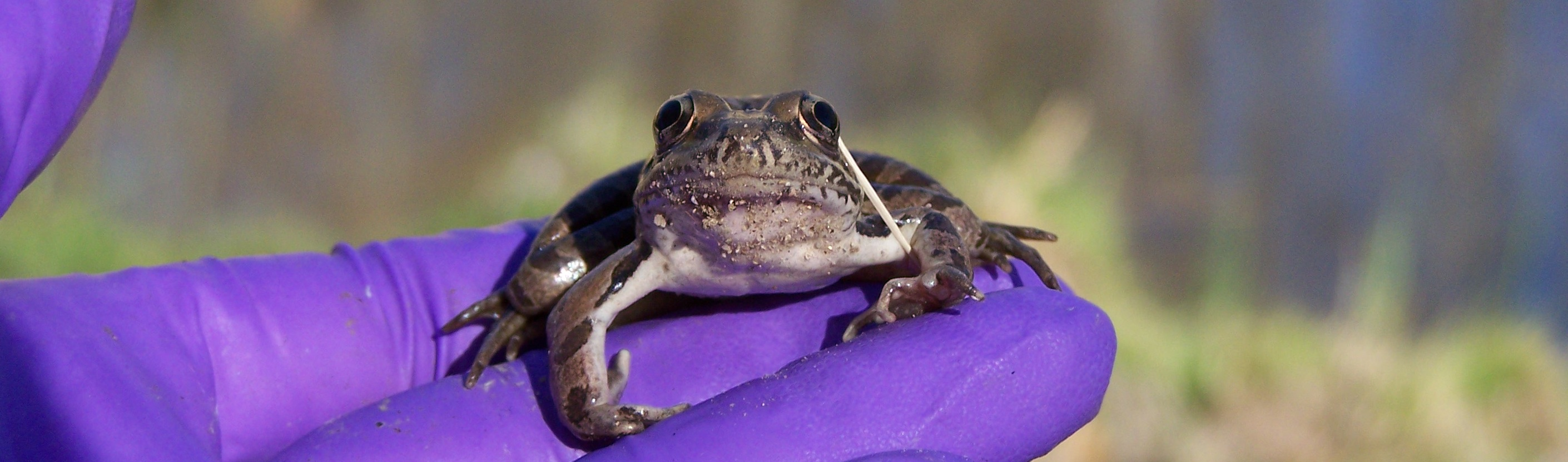 Cute_frog_in_hand