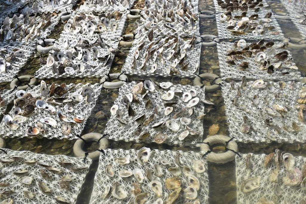Oyster Reef Grid