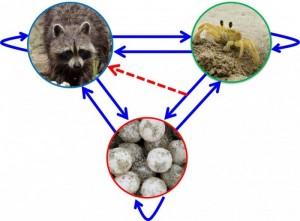 Modeling complex 3-species interactions