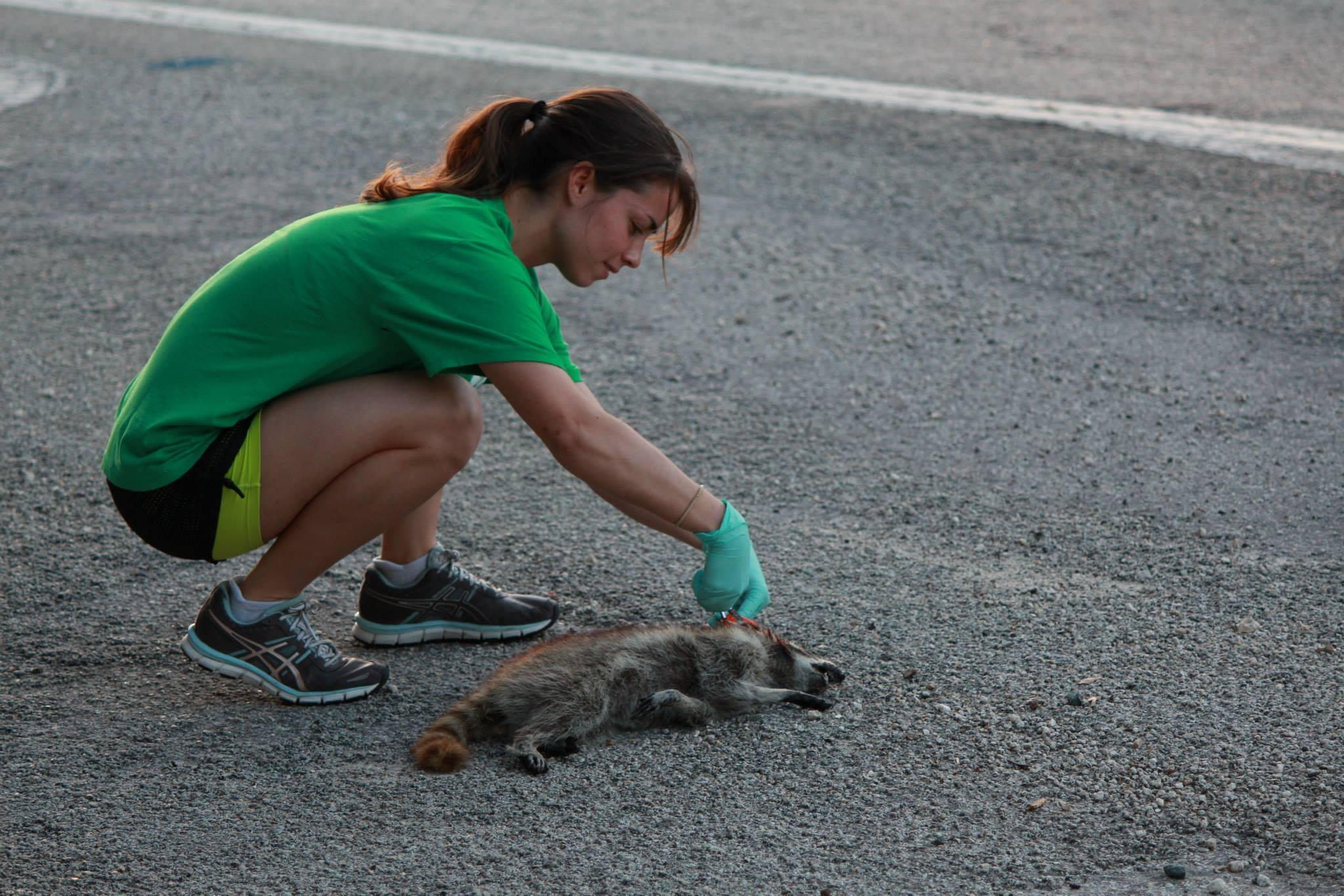 Alexa and raccoon