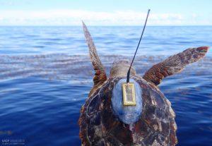 Turtle Tracker