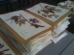 Herbarium Projects
