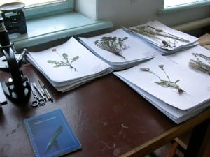 Herbarium Research