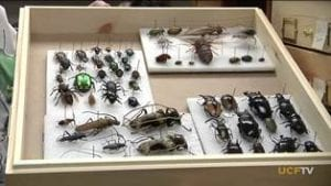 Sample of the Bug Closet collection
