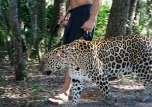 Kennedy's favorite animal he owns is his 16-year-old leopard, Spot. (Photo: Photo Courtesy Valerie Kennedy)